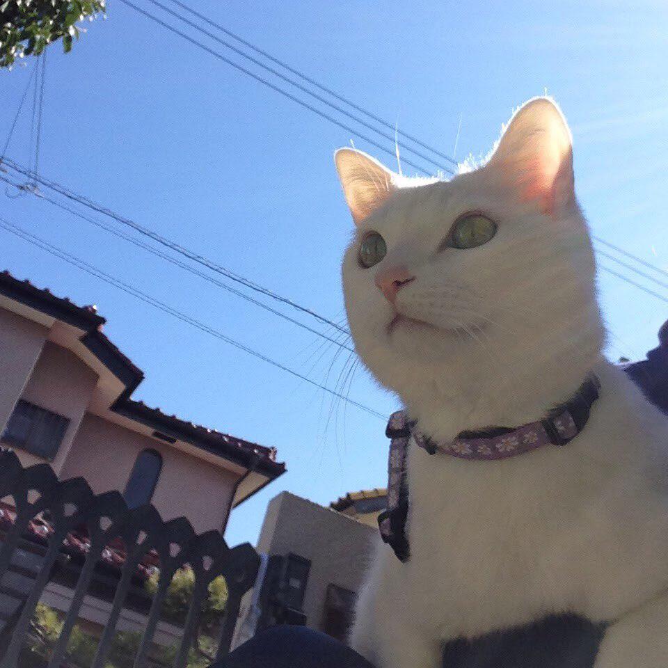 猫SNSキャンペーン