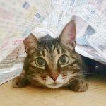 猫_くーちゃん